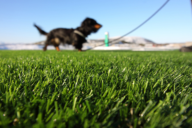 how to keep grass looking good