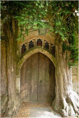 Door within a tree